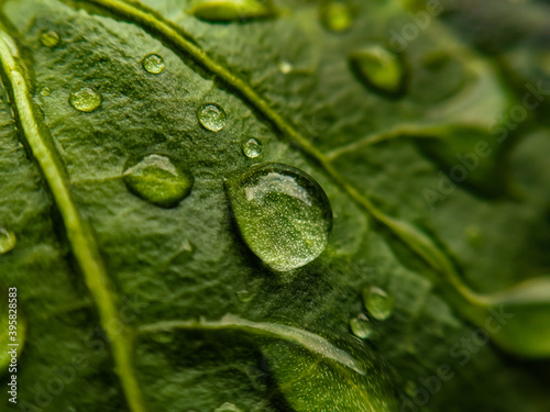 Photo water drops on leaf