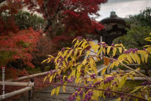 Papel de parede 京都、紫野の大徳寺塔頭 興臨院の秋景色