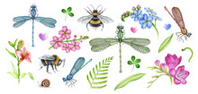 Garden Flowers And Insects Watercolor Illustration Set. Hand Drawn Freesia, Bumblebee, Bee, Dragonfly, Forget-me-not Flower Elements. Meadow Countryside Nature Realistic Element Collection.