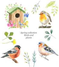 Spring Collection Of Icons: Birds, Robin, Bullfinch, Finch, Plants, Birdhouse, Flowers. Hand-drawn Watercolor Illustration.