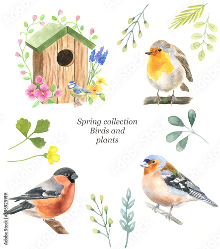 Fotografie, Obraz Spring collection of icons: birds, Robin, bullfinch, Finch, plants, birdhouse, flowers