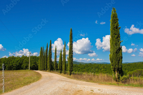 Fototapeta premium A country lane lined with a row of poplar trees running through the green landscape around the historic village of Murlo, Siena Province, Tuscany, Italy