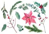 Fototapeta Kwiaty - Watercolor vector Christmas set with winter plants, poinsettia, holly