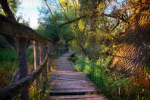 Mystic Wooden Pathway Running ...