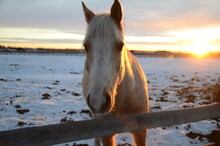 Light Brown Horse With A White Face And The Sun Behind It