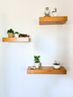 Vertical shot of wall wood shelves with indoor decorative plants