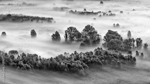 Black and white landscape with the forest wrapped by mist