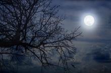 Full Moon In The Garden Above ...