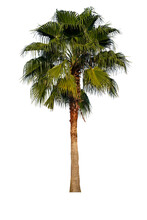 Palm Trees On Green Leaves Isolated On White Background