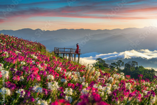 Beautiful girl enjoying at flowers fields and sunrise viewpoint in Tak province Fototapet