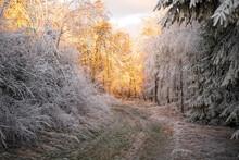 Winter Landscape - Snow Tree R...