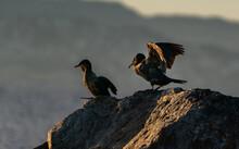 Cormorant On The Rocks