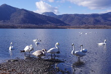 北海道、屈斜路湖の白...