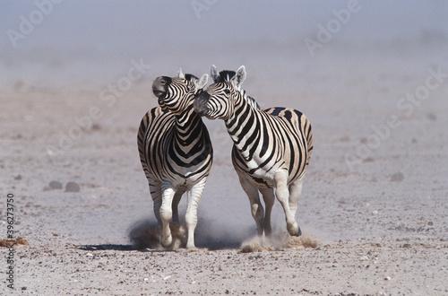 Fototapeta premium Wildlife photography