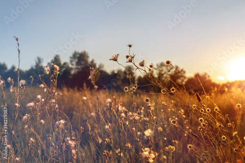 Photo Abstract warm landscape of dry wildflower and grass meadow on warm golden hour sunset or sunrise time