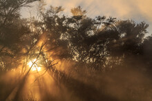 The Rays Of The Setting Sun Shining Through Mist And Shrubs