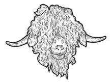 Head Angora Goat. Engraving Vector Illustration. Sketch Scratch Board Imitation.