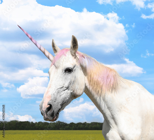 Fotografie, Obraz Amazing unicorn with beautiful mane in field on sunny day