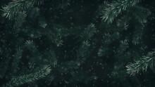 Christmas Tree - Conifer Backround II.