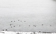 Sunrise On The River In Winter. Dramatic Sky, Ducks In The Water. Flock Of Ducks In Water With