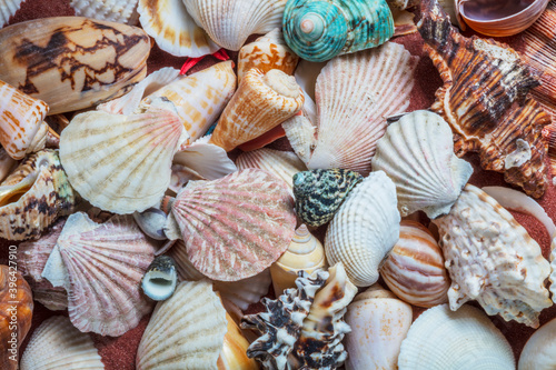 Fotografering Collection of sea shells