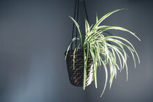 Plant Hanging In A Basket