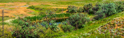 View of oasis in semi desert or steppe area with lake, trees and green grass Fotobehang