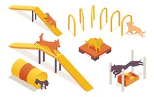 Isometric Collection Of Dogs Training On Pet Agility Equipment Elements. 3d Characters Running, Jumping And Climbing