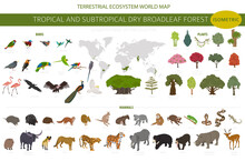 Tropical And Subtropical Dry Broadleaf Forest Biome, Natural Region Infographic. Seasonal Forests. Animals, Birds And Vegetations Ecosystem Isometric 3d Design Set