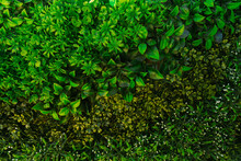 Closeup View Photography Of Green Plastic Evergreen Artificial Plants