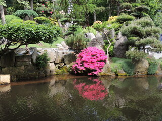 Japonski ogrod