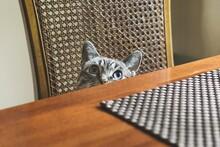 Blue Eyed Cat Peeking