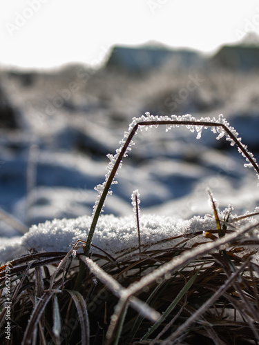 grass under the snow in the cold Fototapeta