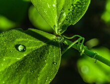 Water Drops After Rain On The Leaves Of Plants