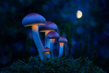 Fantastic World Of Mushrooms. Glowing Mushrooms In The Night Forest. Night Landscape.