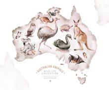 Watercolor Australian Cartoon Kangaroo, Ostrich Emu , Koala And Flying Fox, Owl, Echidna . Australian Black Swan And Numbat Kookaburra , Cockatoo Kids Illustration. Nursery