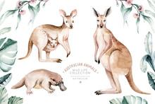 Watercolor Australian Cartoon Kangaroo And Platypus Isolated On White Background. Australian Kangaroos Set Kids Illustration. Nursery Art