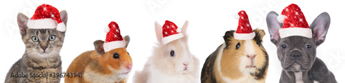 faces of different pets with christmas hats © absolutimages