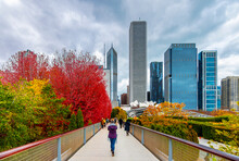 Autumn Colors In Chicago Of USA