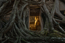 Buddha Statue In A Church Covered With Tree Roots At Bangkung Temple At Samut Songkhram In Thailand.