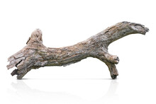 Tree Trunk, Branch Tree Dry Cracked Dark Bark Isolated On White Background. Clipping Path
