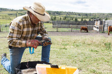 Male Rancher At Toolbox Preparing Cattle Tags On Sunny Ranch