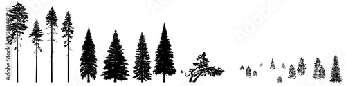 Fotomural Set of wild coniferous trees hand-drawn in silhouette