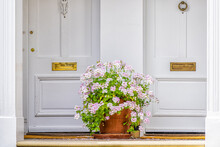 Pink White Color Geranium Flower Basket Box Potted Pot Decoration In Summer By Doorstep Porch Of Doors With Mail Slots And Knob Knockers In Chelsea, London UK Window