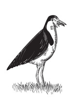 Spur-Winged Plover Or Masked Lapwing Standing Woodcut Black And White