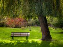 Bench Under The Twigs Of A Wil...