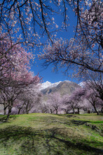 Spring Landscape , Also Known As Blossom And Springtime, Is One Of The Four Temperate Seasons, Succeeding Winter And Preceding Summer. There Are Various Technical Definitions Of Spring,