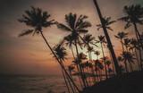 Fototapeta Fototapety z morzem do Twojej sypialni - Tropikalny krajobraz, palmy na tle oceanu i zachodzącego słońca.