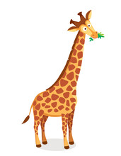 Vector Picture Of Cartoon Character Giraffe With Long Neck Chewing Eating Leaves, Grass, Illustration For A Children Book. Long-necked Mammal Hoofed Animal.