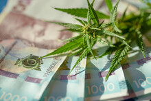 Cannabis Leaves And Ukrainian ...